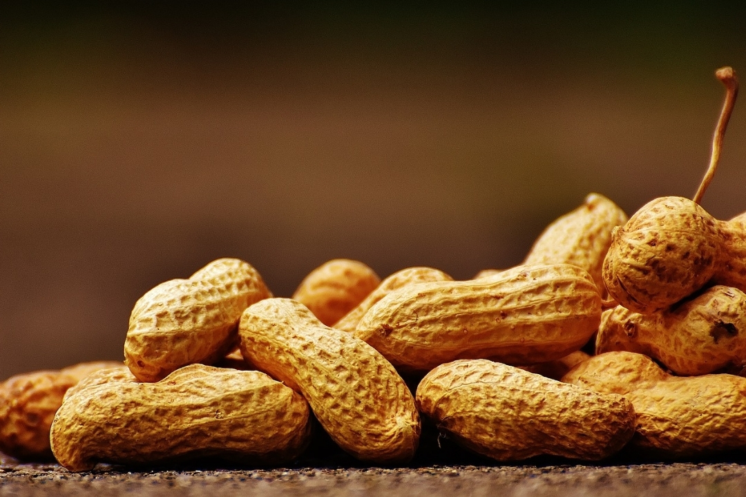 a close up of peanuts - flying with allergies