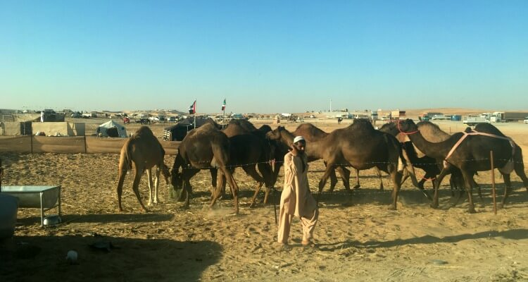 bedouin camps at Al Dhafra Festival | Hoe to tackle the Al Dharfa Festival with Kids