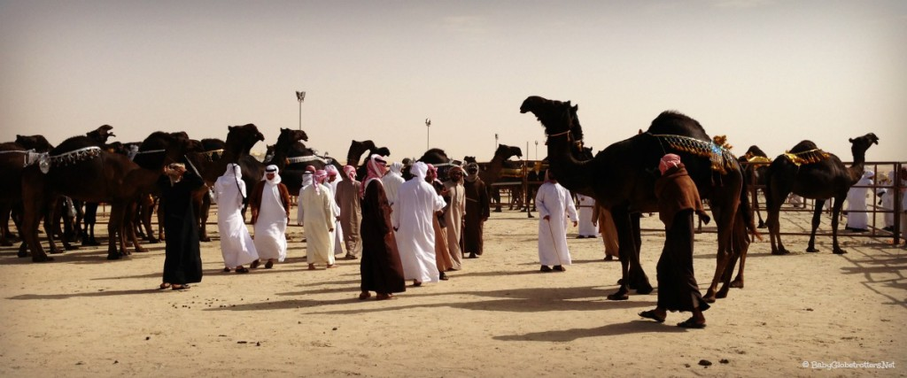 Al Dhafra Festival & the Camel Beauty Contest | Discover the UAE | OurGlobetrotters.Com