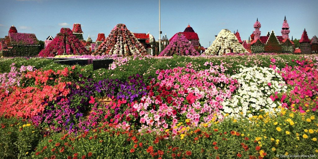 Dubai Miracle Garden | Discover the UAE | All images subject to copyright
