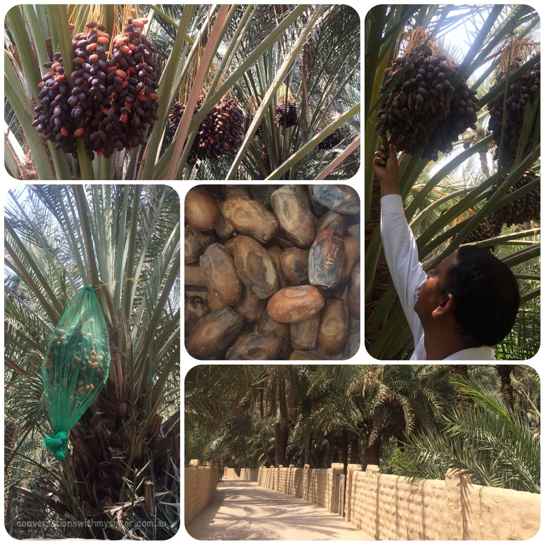 Al Ain Oasis   things to do with family in the UAE