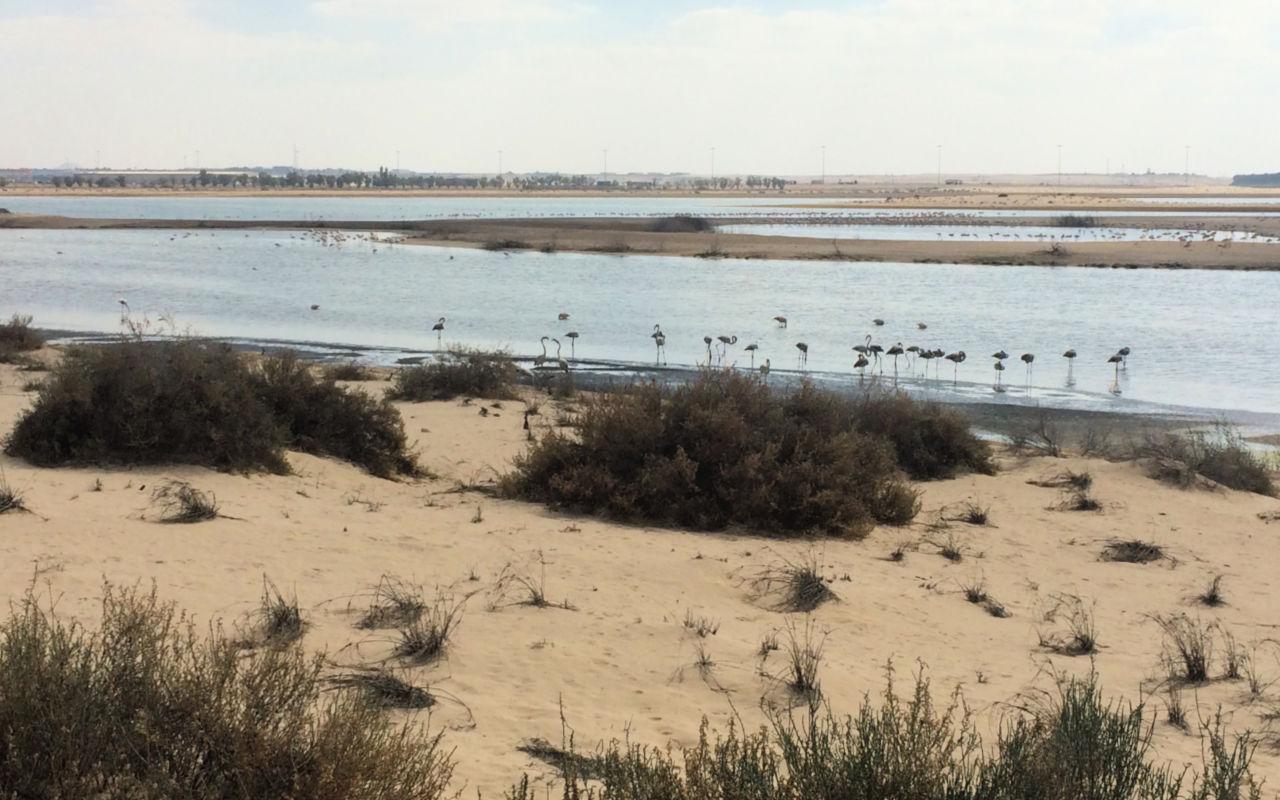 Al Wathba Wetlands