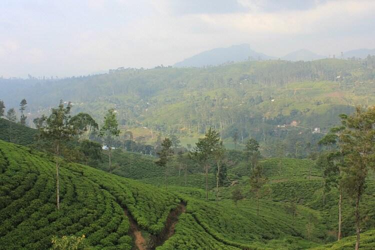 Sri Lanka - Hidden Gems of Family Travel | OurGlobetrotters.Com