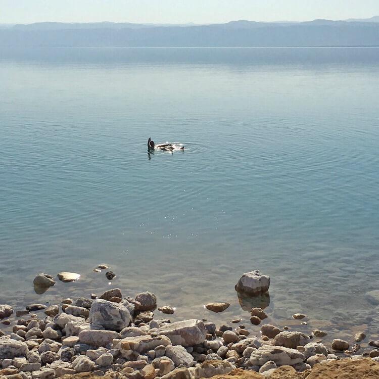 Enjoying floating in the Dead Sea at Mövenpick Resort & Spa