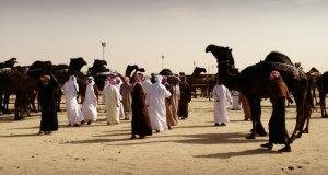 Camel beauty contest judging at Al Dhafra Festival