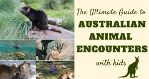Best Australian Animal Encounters as chosen by family travel bloggers | Our Globetrotters