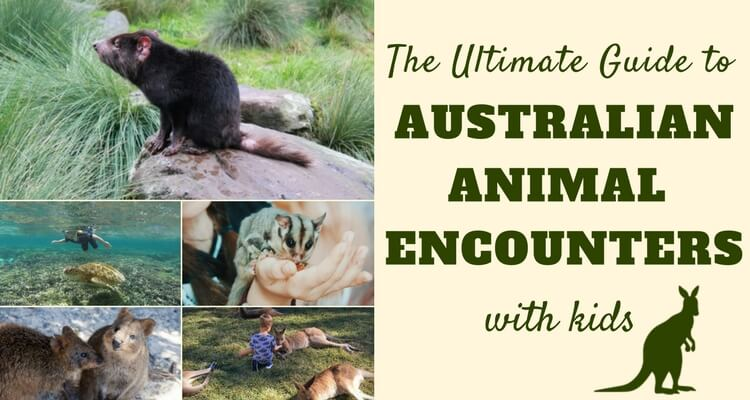 The Ultimate Guide to Australian Animal Encounters