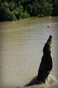 Adelaide River Jumping Cros Darwin | Best Australian Animal Encounters