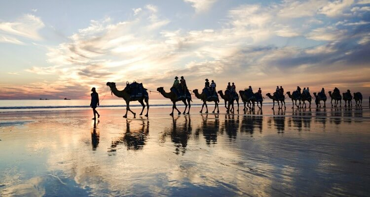 Broome Camels at Sunset | Best Australian Animal Encounters | Our Globetrotters