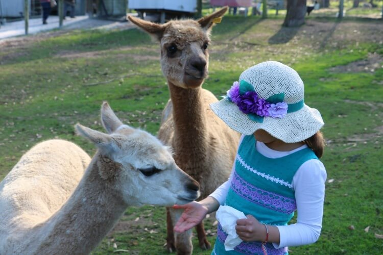 Denmark Animal Farm | Australia's best animal encounters with kids | Our Globetrotters
