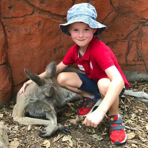 Dreamworld on the Gold Coast - Australia's best animal encounters for kids | Our Globetrotters