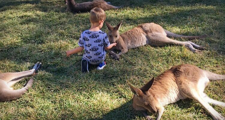 Feeding Kangaroos at Currumbin | Please Australian Animal Encounters | Our Globetrotters