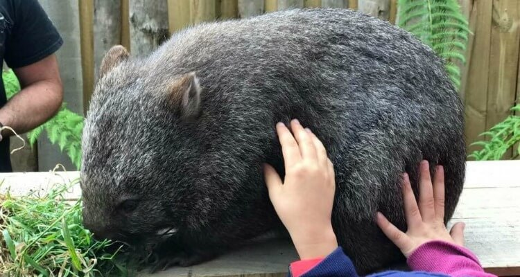 Trowunna Wildlife Sanctuary Tasmania | Best Australian Animal Encounters | Our Globetrotters