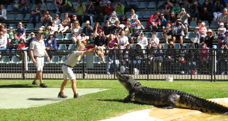 Crocodile Show at Australia Zoo on the Sunshine Coast | Best Australian Animal Encounters | Our Globetrotters