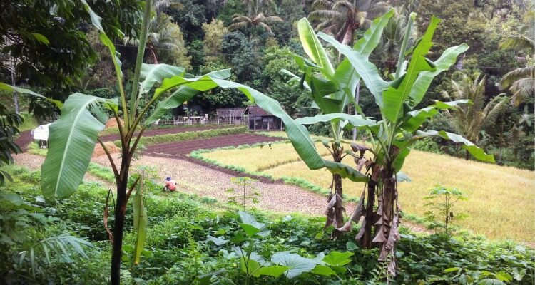 Bali Hidden Gems Sidemen | Where to stay in Bali away from the crowds | Rice fields in Iseh Village Sideman | Bali Vacation