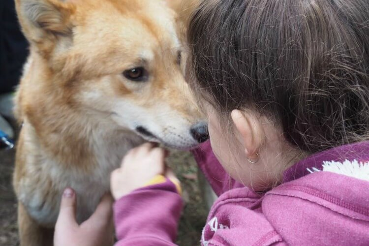Dingo encounter - Sydney with Kids