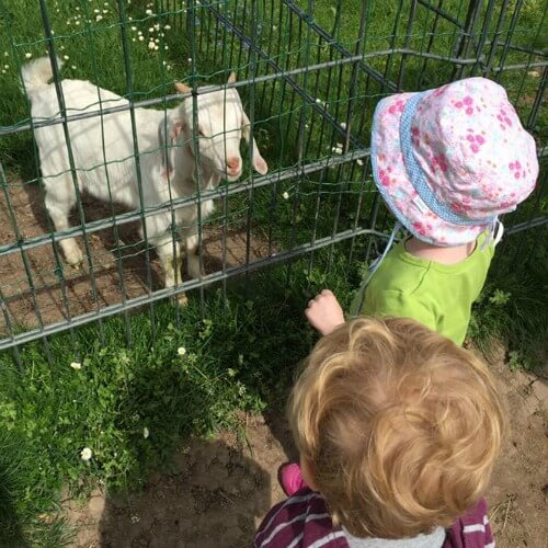 Petting Zoo Killesburg Park | How to spend 24 hours in Stuttgart, Germany with Kids | Explore My City Guest Post on Our Globetrotters