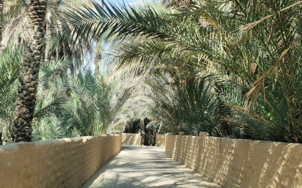 One of the small oasis in Al Ain UAE
