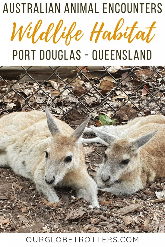 Wildlife Habitat in Port Douglas Queensland