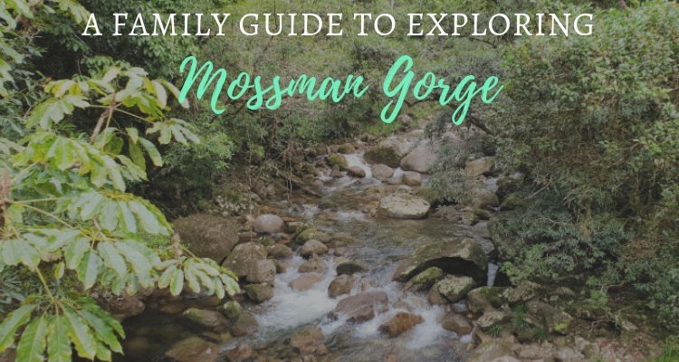 Mossman Gorge Day Trip Guide
