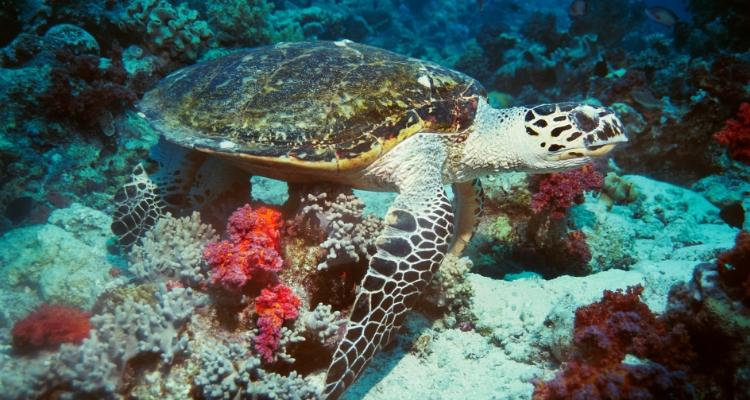 Turtle Island Serangan Bali