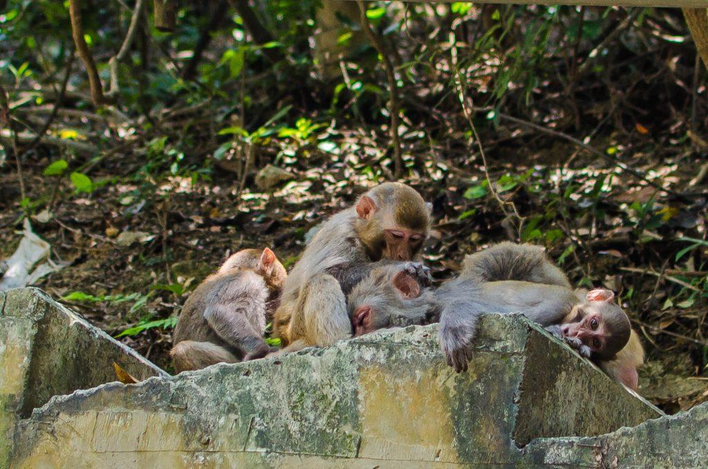 Monkey Mountain-yum cha-1027