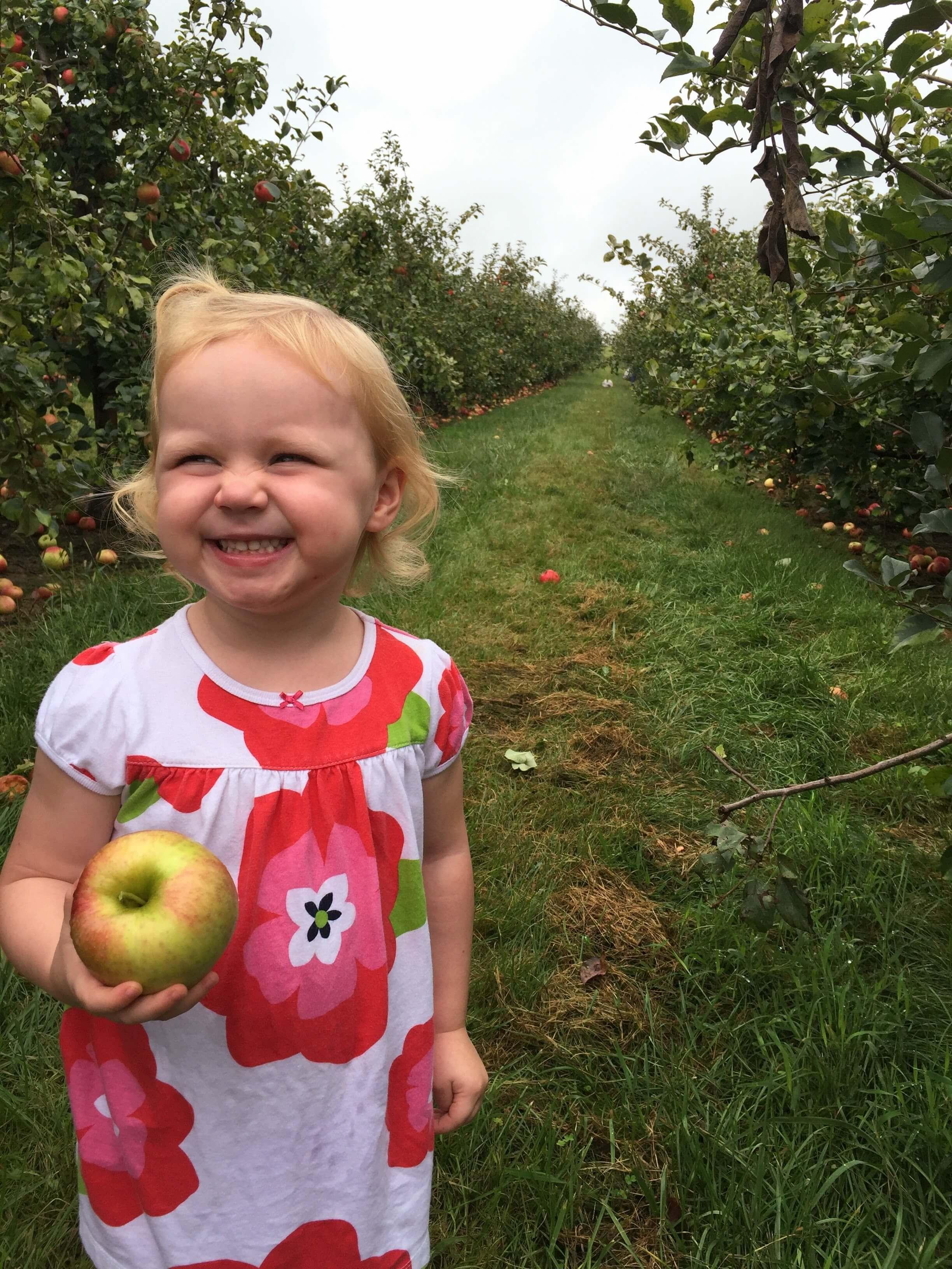 Apple Picking in Columbus Ohio