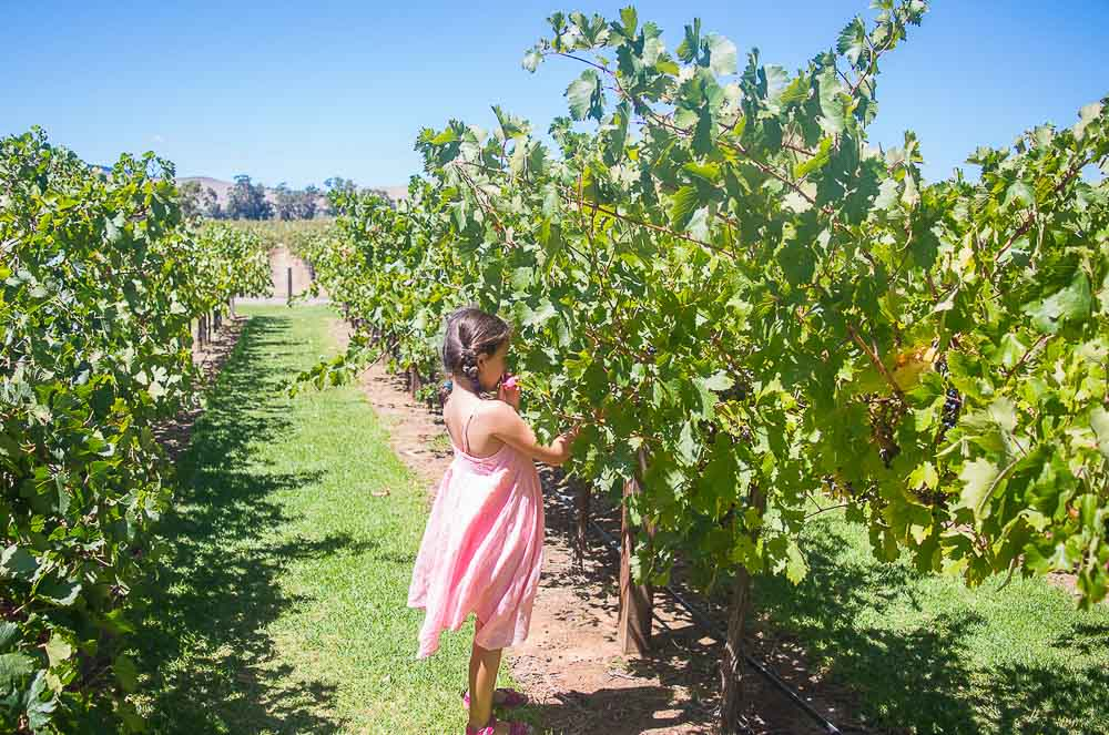 Barossa Thrifty Family Travels