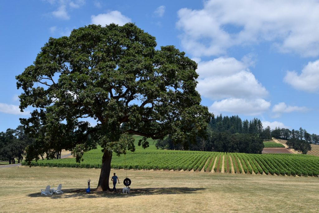 Willamette Valley wine To & Fro Fam