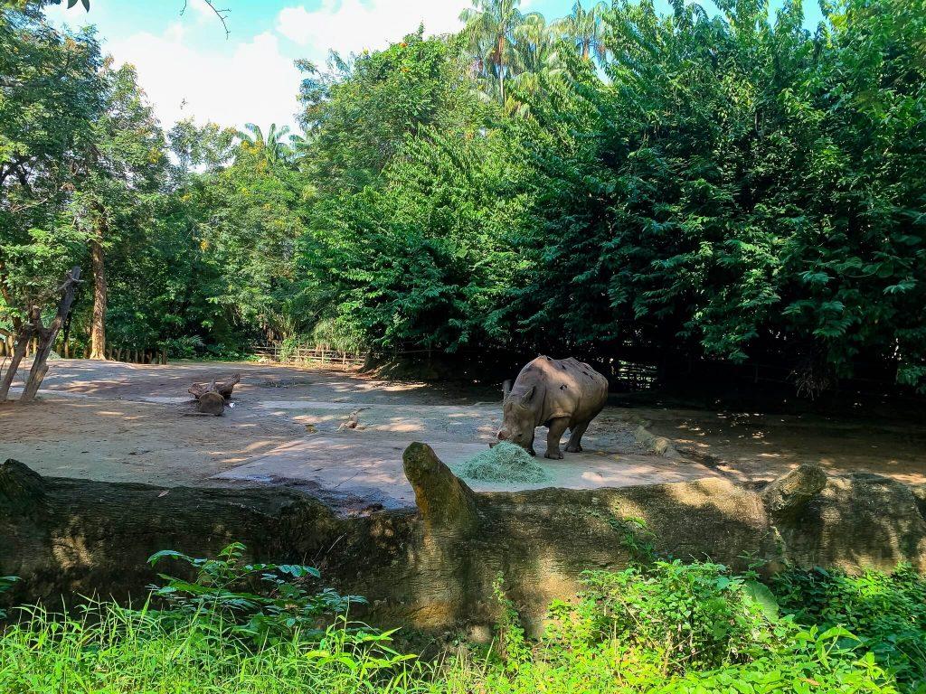 Singapore - Zoo
