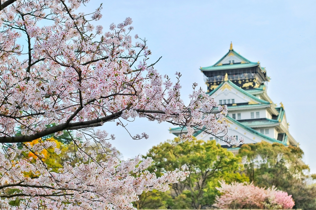 Osaka Castle with cherry blossoms, places to visit in Kansai region Japan