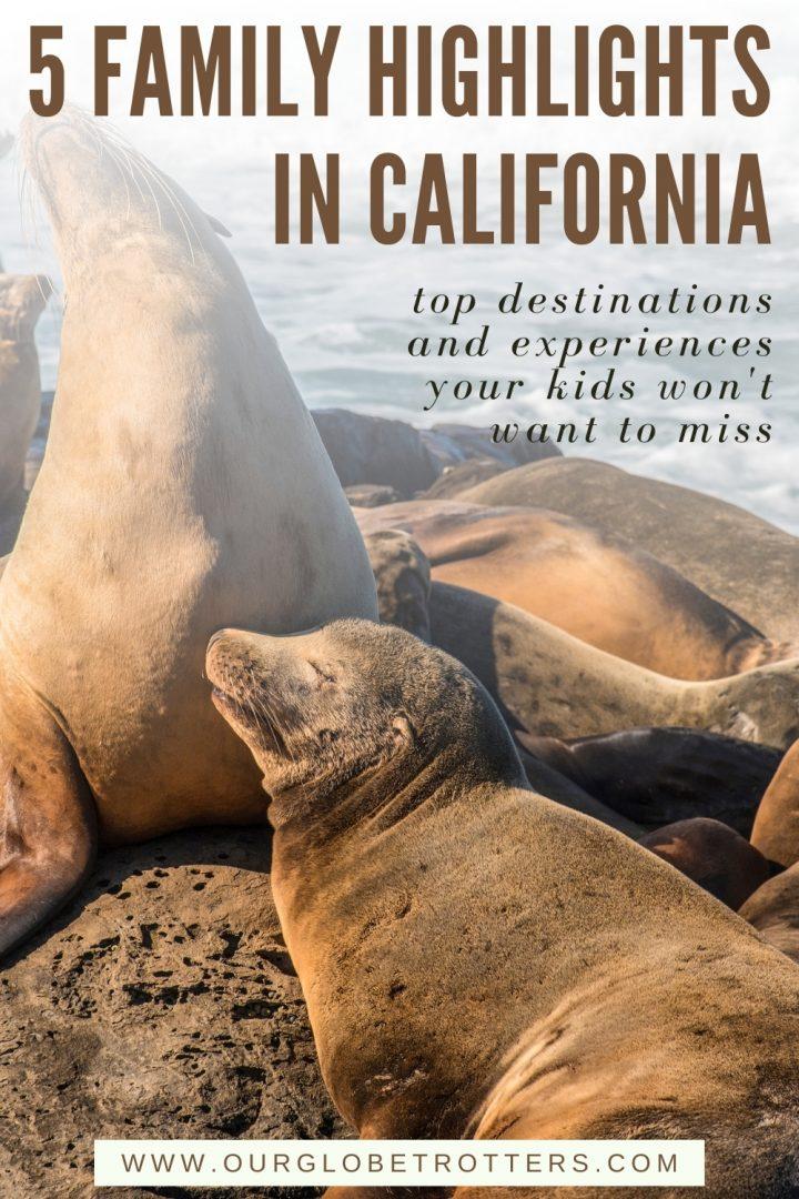 seals in california; 5 family highlights in california
