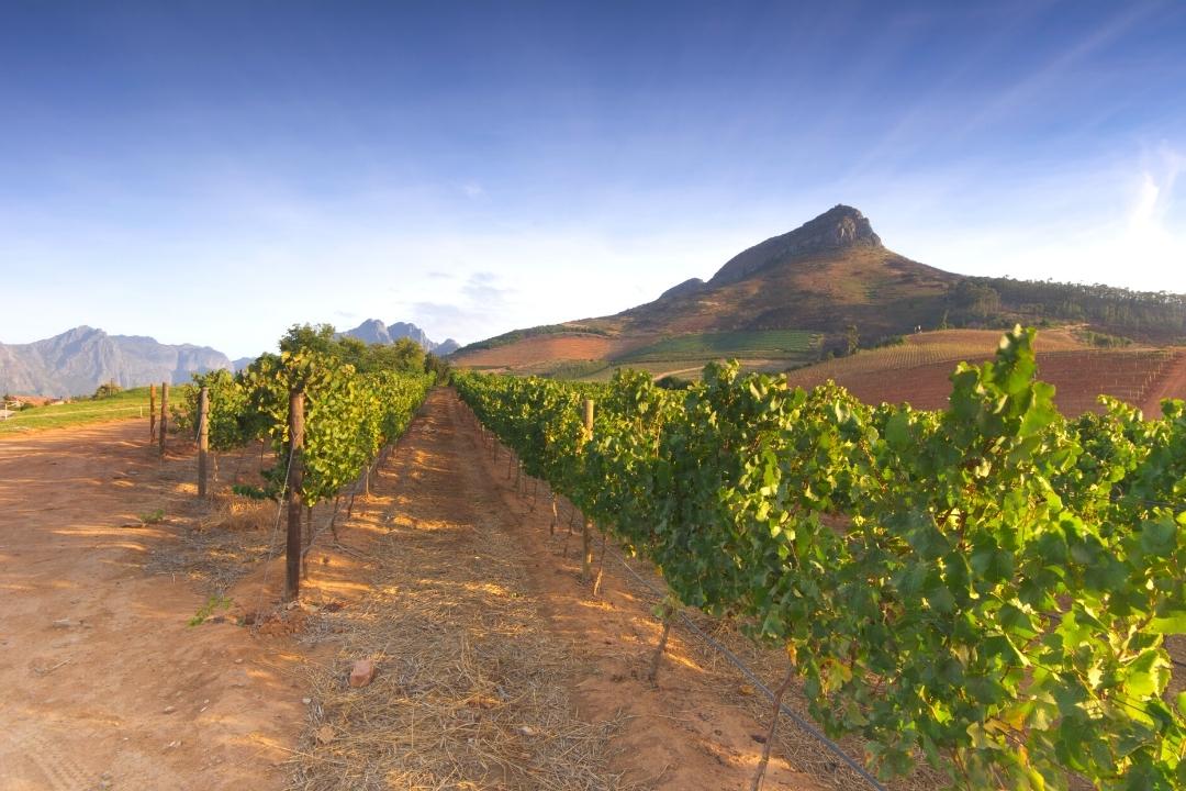 Western Cape South Africa Stellenbosch