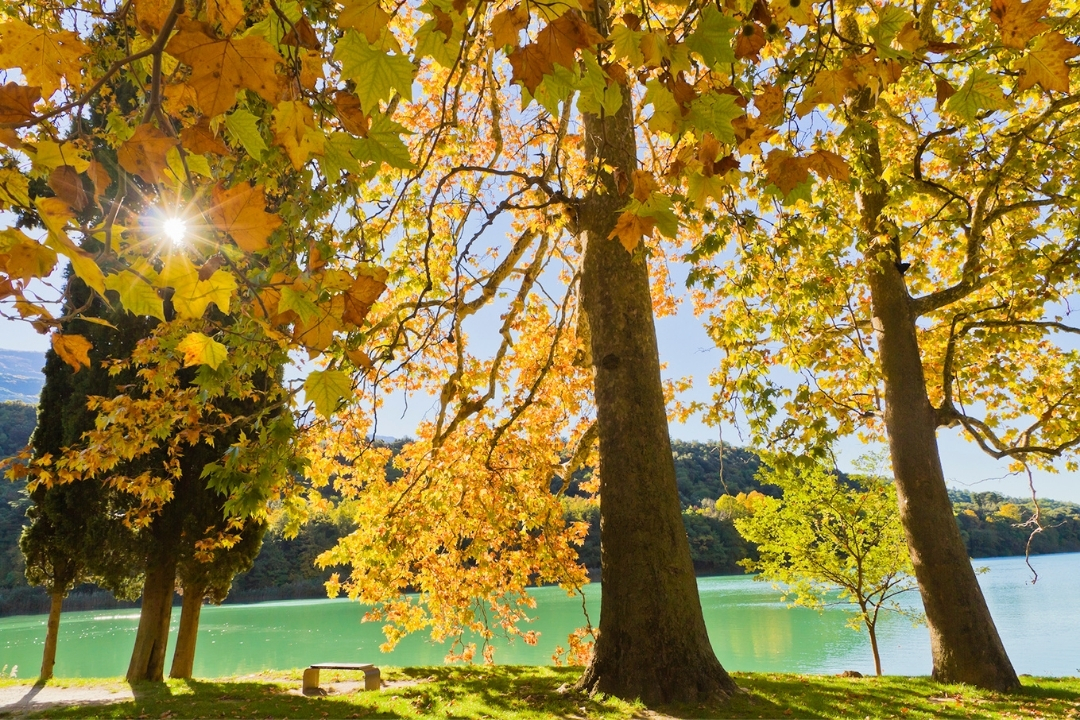italy in autumn, beautiful yellow leaves set against Lake Toblino
