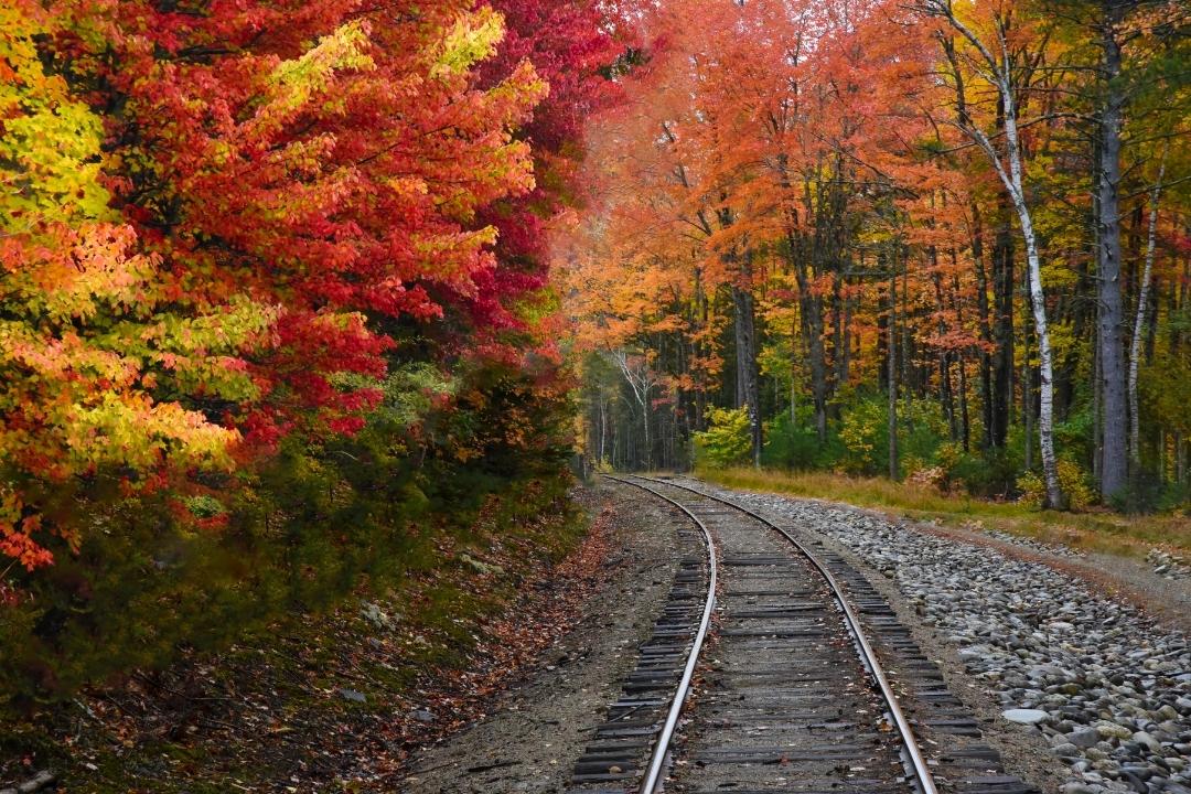 train track through fall leaves