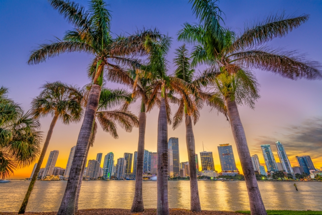 High rises of Miami downtown seen through palm trees at sunset