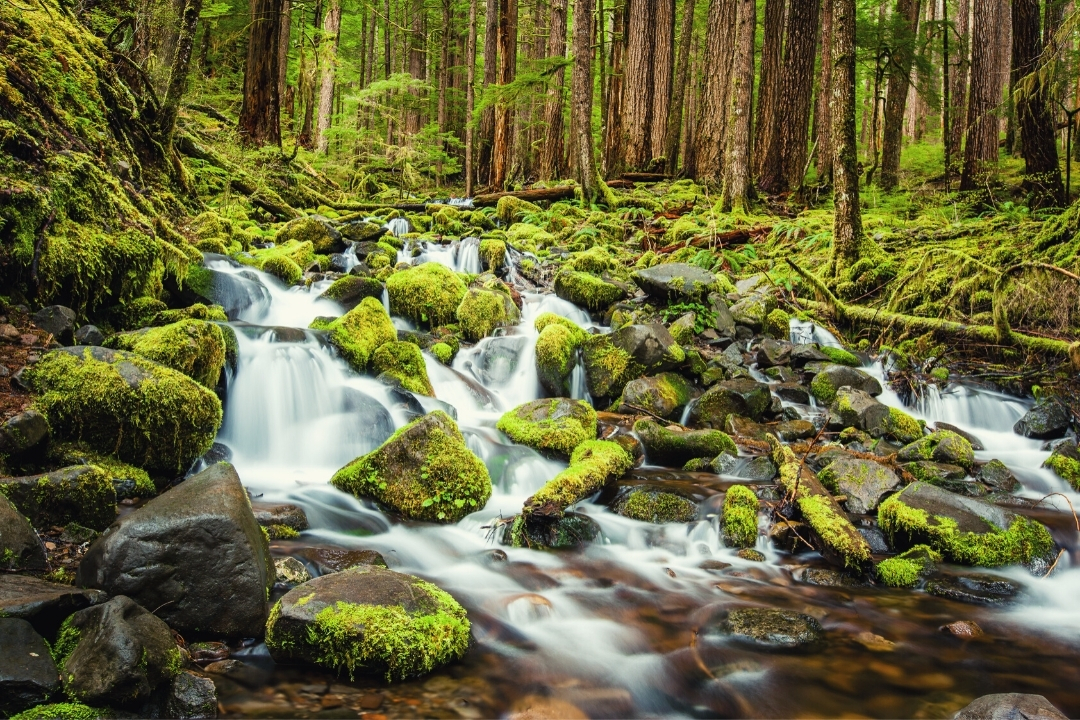 Waterfall Olympic National Park Sol Duc