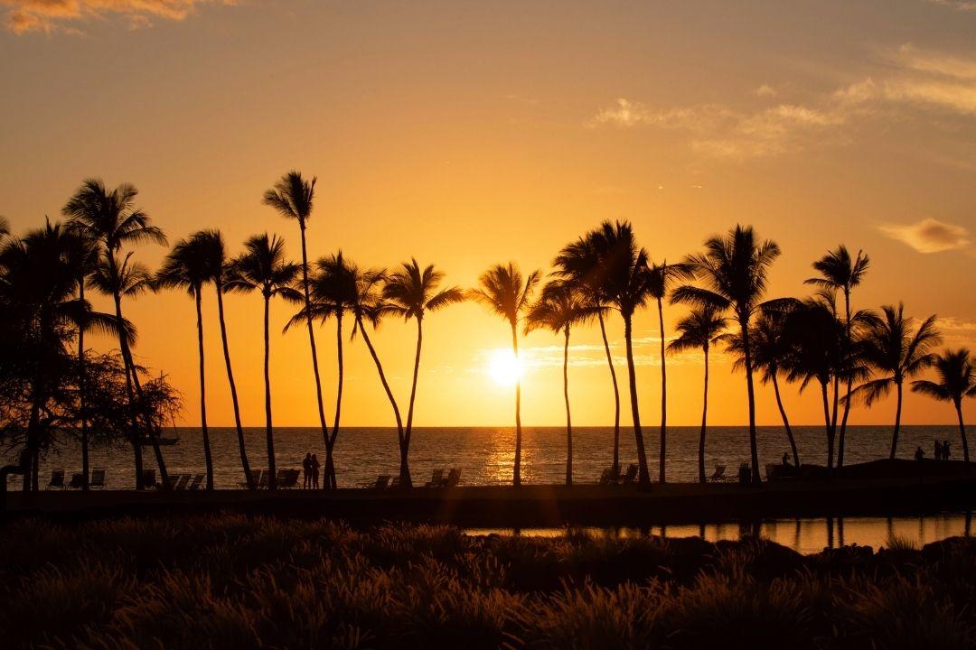 Plam trees at sunset Big Island Hawaii